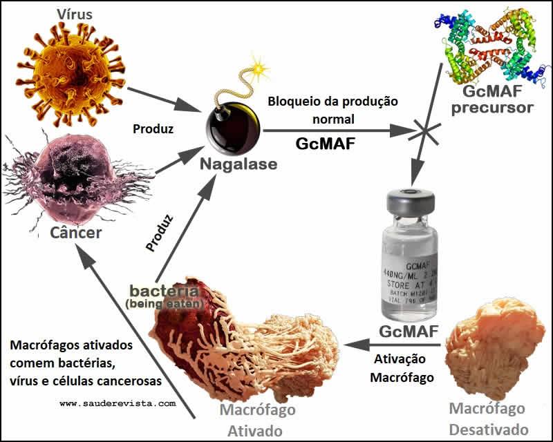 GcMAF Nova terapia contra o cancer