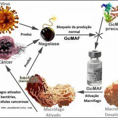 GcMAF: Uma nova terapia na guerra contra o câncer?